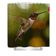 Ruby-throat Hummingbird Shower Curtain