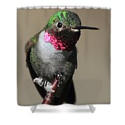 Ruby-throated Hummer Shower Curtain