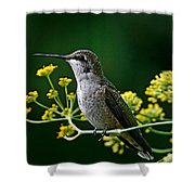 Ruby Throated Hummingbird 1 Shower Curtain