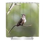 Ruby-throated Hummingbird 9332-1 Shower Curtain