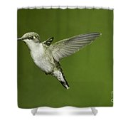 Ruby-throated Hummingbird At Flower Shower Curtain