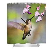 Ruby-throated Hummingbird - Digital Art Shower Curtain