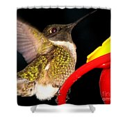 Ruby-throated Hummingbird Landing On Feeder Shower Curtain
