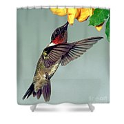 Ruby-throated Hummingbird Male At Flower Shower Curtain