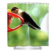 Ruby-throated Hummingbird Pooping Shower Curtain