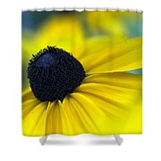 Rudbeckia Coneflower Shower Curtain