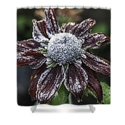 Rudbeckia First Frost Shower Curtain