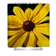 Rudbeckia Macro Shower Curtain