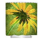 Rudbeckia On Cement Shower Curtain