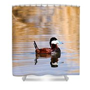 Ruddy Duck  Shower Curtain