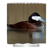 Ruddy Duck On Still Pond Shower Curtain