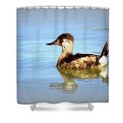 Ruddy Duck Shower Curtain