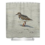 Ruddy Turnstone Wading Bird - Arenaria Interpres Shower Curtain