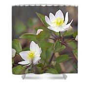 Rue Anemone Wildflower - Pale Pink - Thalictrum Thalictroides Shower Curtain
