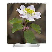 Rue Anemone Wildflower - Pink - Thalictrum Thalictroides Shower Curtain
