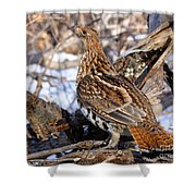 Ruffed Grouse On Alert Shower Curtain