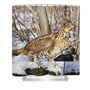Ruffed Grouse On Snowy Log Shower Curtain