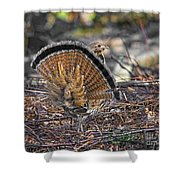 Ruffed Grouse Rear Strut Shower Curtain