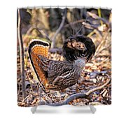 Ruffed Grouse Ruffed Up Shower Curtain