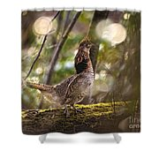 Ruffed Grouse Side Pose Shower Curtain