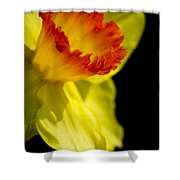Ruffled Cup Shower Curtain