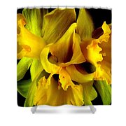 Ruffled Daffodils Shower Curtain
