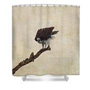 Ruffled Up Osprey Shower Curtain