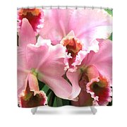 Ruffles And Flourishes Cattleya Orchids Shower Curtain