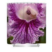 Ruffly Purple Orchid Closeup Shower Curtain