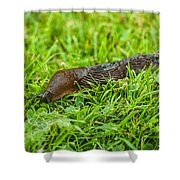 Rufous Garden Slug Shower Curtain