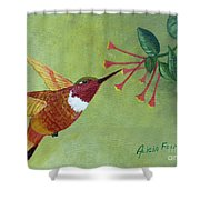 Rufous Hummingbird Shower Curtain