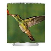 Rufous Hummingbird Feeding Shower Curtain