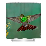 Rufous-tailed Hummer Shower Curtain