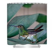 Rufous-tailed Hummingbird On Nest Shower Curtain