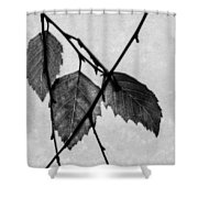 Rule Of Three Shower Curtain
