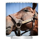 Run Away And Hide Shower Curtain