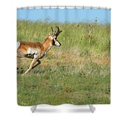 Run  Light Buck  Run Shower Curtain