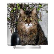 Runcius- Palm Sunday Kitty Shower Curtain