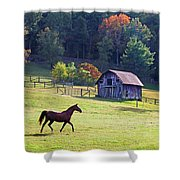 Running Horse And Old Barn Shower Curtain