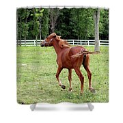 Running In The Breeze Shower Curtain