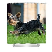 Running Puppy Shower Curtain