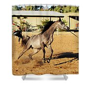 Running Roan Shower Curtain