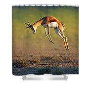 Running Springbok Jumping High Shower Curtain