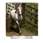 Running White Colours Shower Curtain