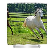 Running Wild Shower Curtain by Paul Ward