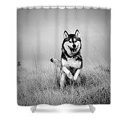 Running Wolf Shower Curtain