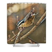 Runway Clear For Takeoff   Redbreasted Nuthatch Shower Curtain