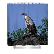 Ruppells Griffon Vulture Shower Curtain