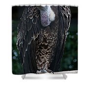 Ruppel's Griffon Shower Curtain