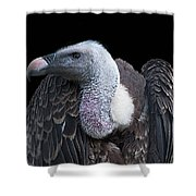 Ruppel's Griffon On Black Shower Curtain